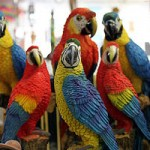 Do Catechisms Create Parrots?